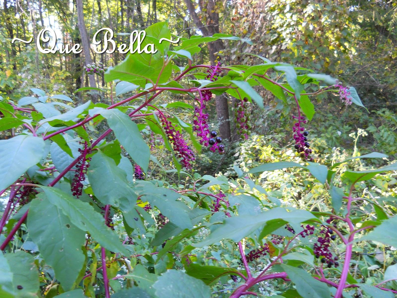 Que Bella Autumn S Floral Bounty