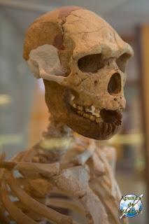 Cráneo del hombre de Tautavel