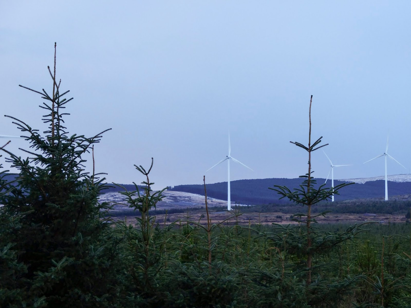 Conifer trees in the foreground with windmills and snow dusted mountains in the distance.