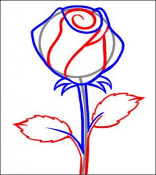 Cara Menggambar Bunga Mawar Dengan Mudah Caranyamenggambar