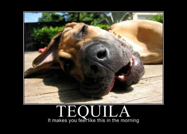 Tequila Demotivational Posters Unmotivational Posters