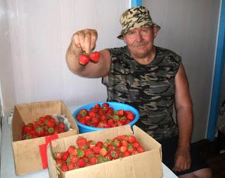 Конец июня, собираю клубнику, всего собрано уже 90л