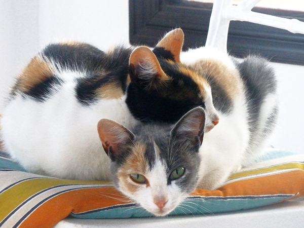 multi-colored kittens cute