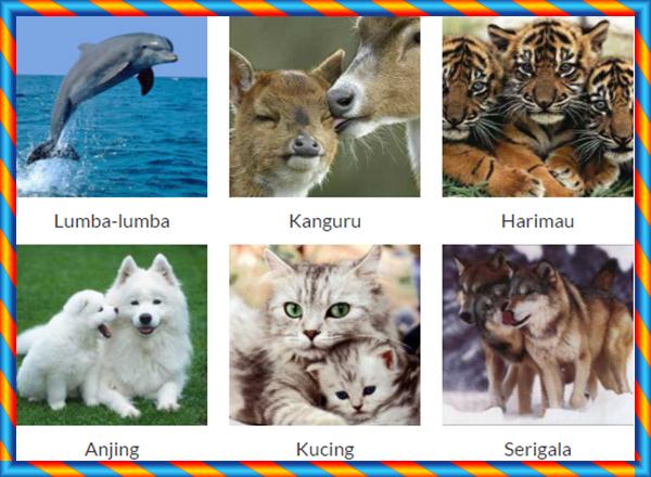 Daftar Nama 51 Binatang Mamalia Nama Gambar Binatang A Z
