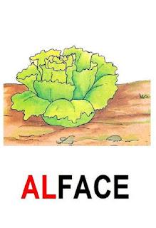 Cartaz de alface
