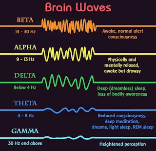 Brain Waves and Brain States