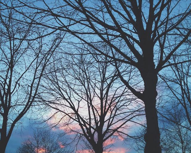 arbres ciel rose