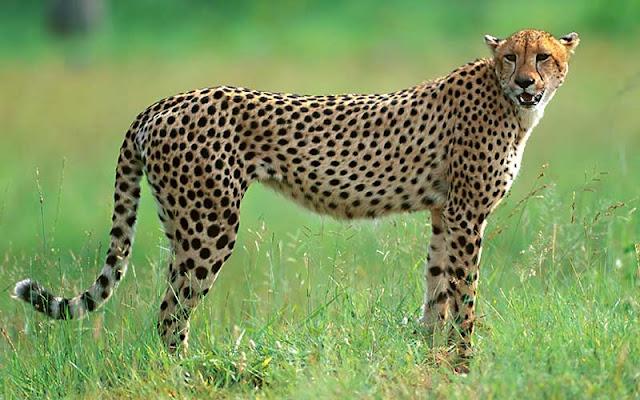 Velocidad Asesina, Animales mas Rapidos del Planeta