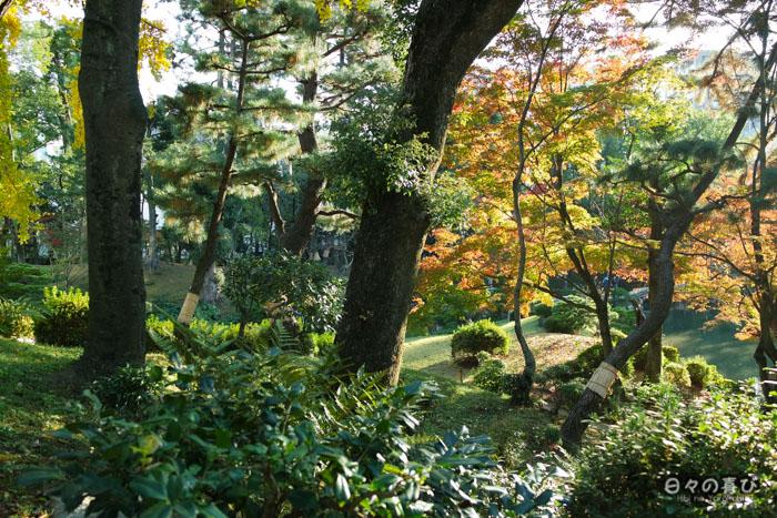 Végétation, couleurs d'automne, jardin shukkei-en, Hiroshima-shi