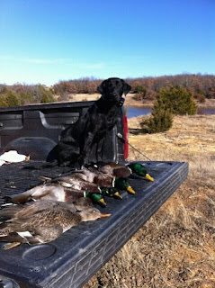 North Texas Duck Hunting|North Texas Retriever Trainers