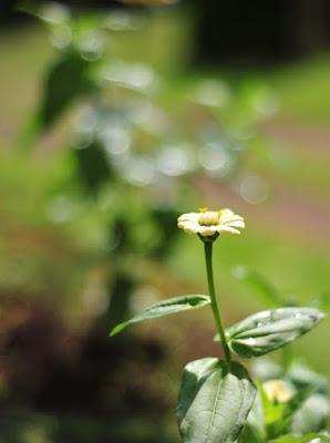 Foto Bokeh Lensa Nikon AF 50mm f/1.8D