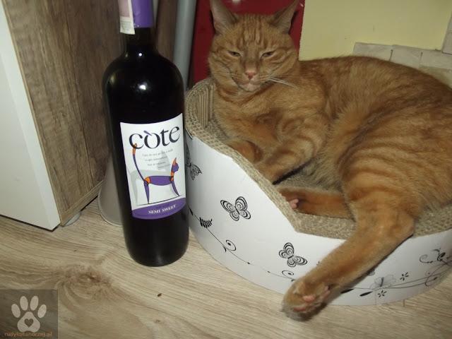 rudy kot andrzej i wino