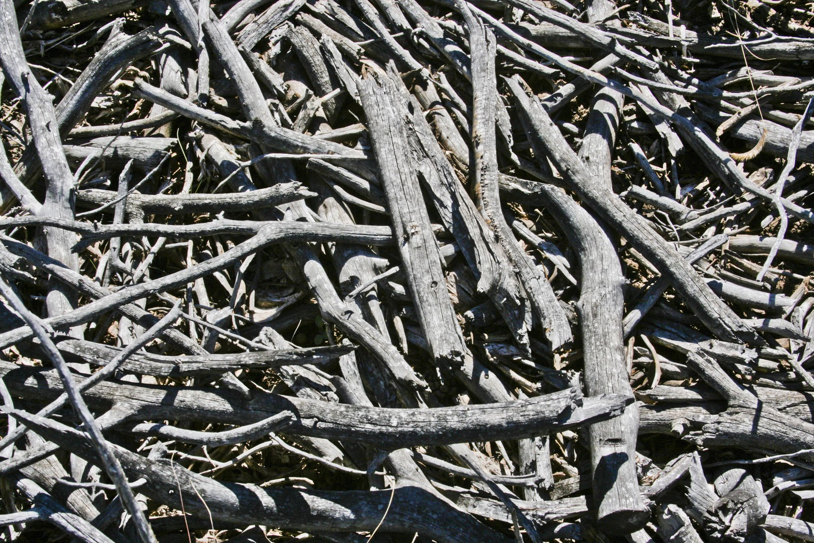 Walking Arizona: Forest Bone Pile