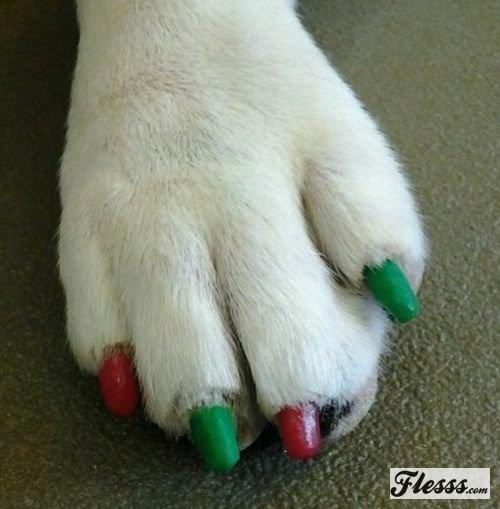 Dagensinn Amazing Dog Nail Painting