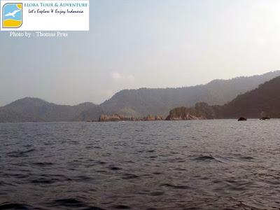 Batu Gigi Hiu, Kelumbayan, Lampung