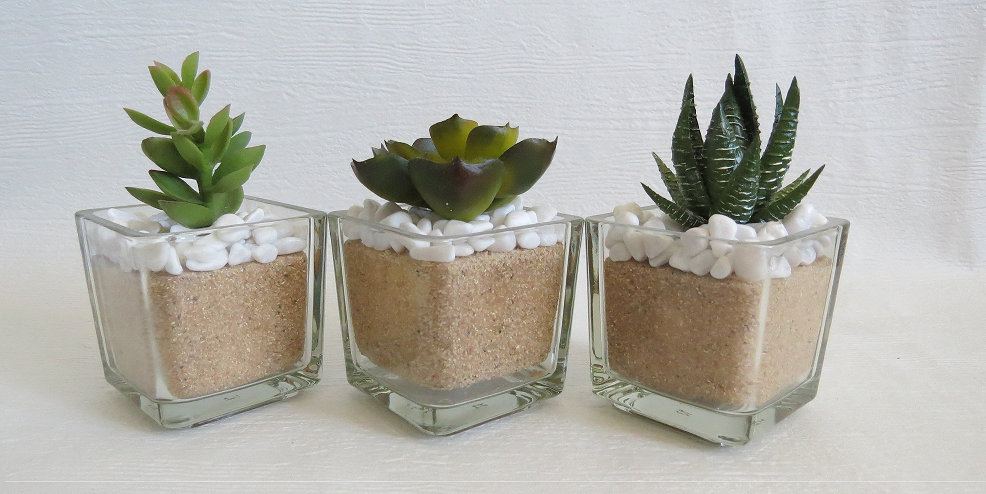 A Trio Of Cacti