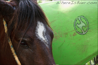 WaveSport horse, kayak on horse, colombia, chris baer