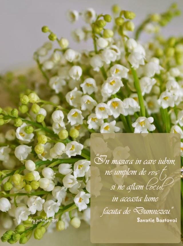 citat savatie bastovoi despre iubire rost loc viata