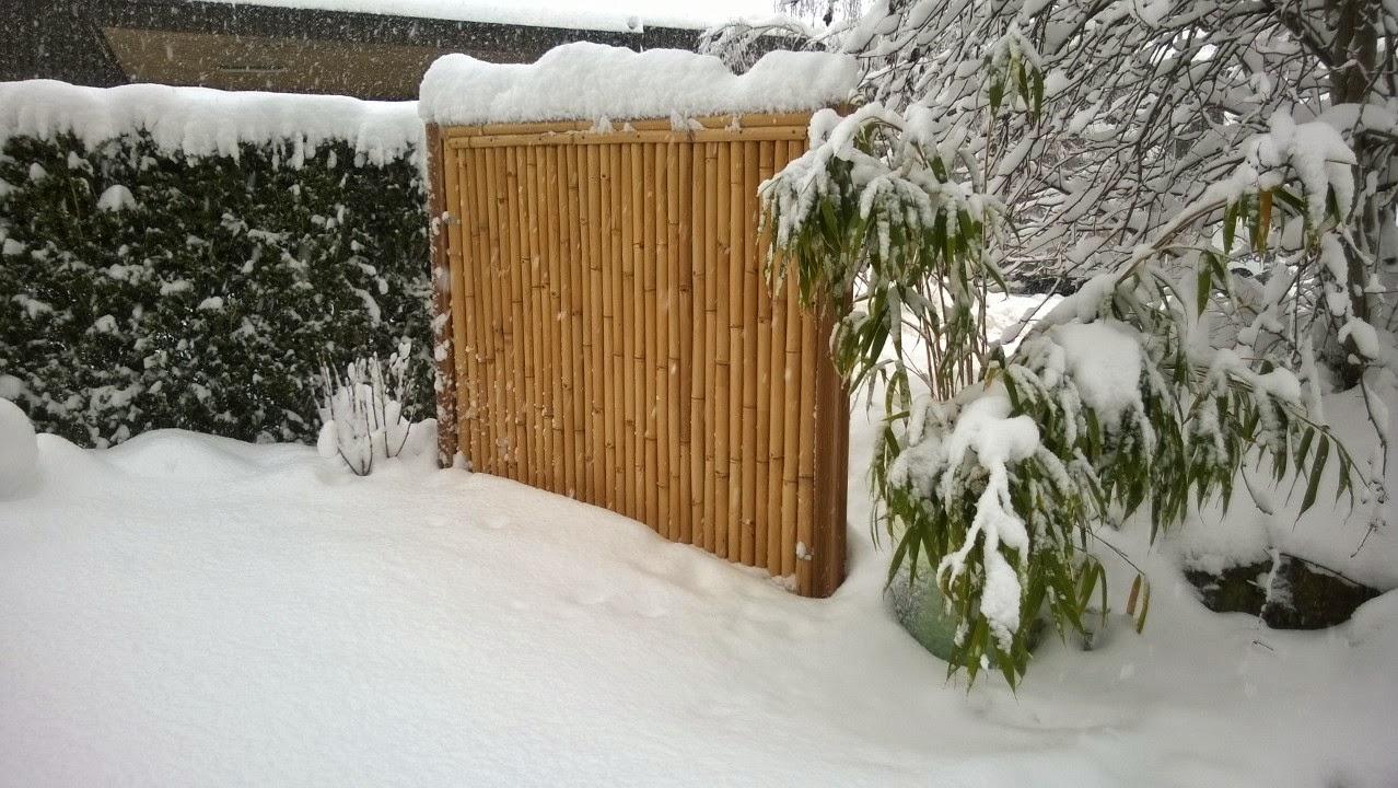 bambus und schnee wer h tte es gedacht art bambus. Black Bedroom Furniture Sets. Home Design Ideas