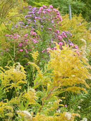 Autumn New England Asters and Goldenrod at the Toronto Botanical Garden's Woodland Walk by garden muses--not another Toronto gardening blog