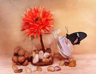 kupu-kupu yang diawetkan dengan formalin, beberapa cangkang kerang, sekuntum bunga imitasi, dan beberapa butir koral menghias toples sederhana menjadi penghias ruangan yang cantik