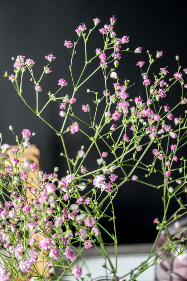 www.fim.works | Fotografie. Wortakrobatik. Wohngefühl. | Lifestyle Blog | Rosa Schleierkraut