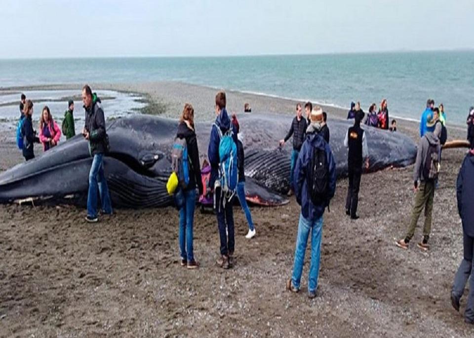 Encontraron ballena varada en Punta Delgada
