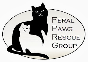 Saving Domestic + Feral Cats From High-Kill Shelters