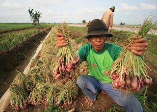 Cilacap Menuju Daerah Produsen Bawang