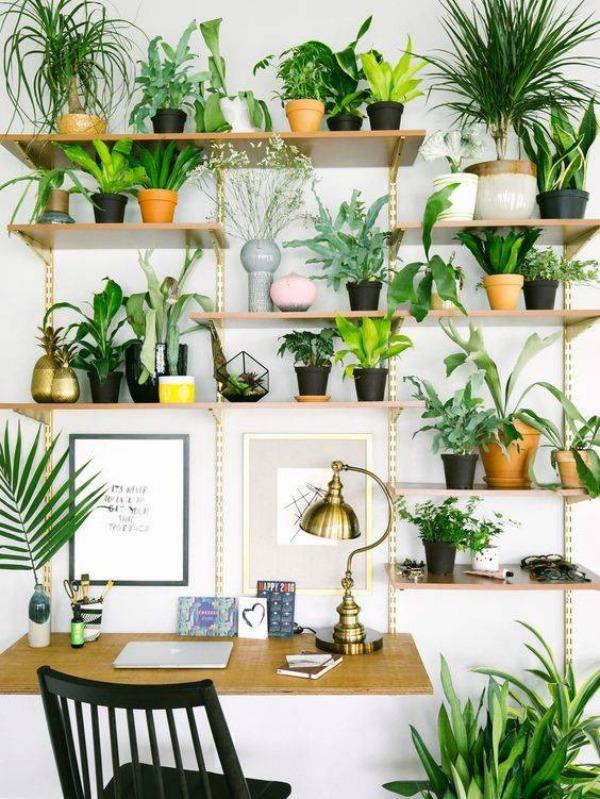 small room plants