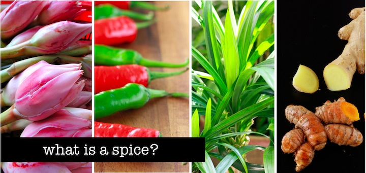 what is the difference between a spice and herb?