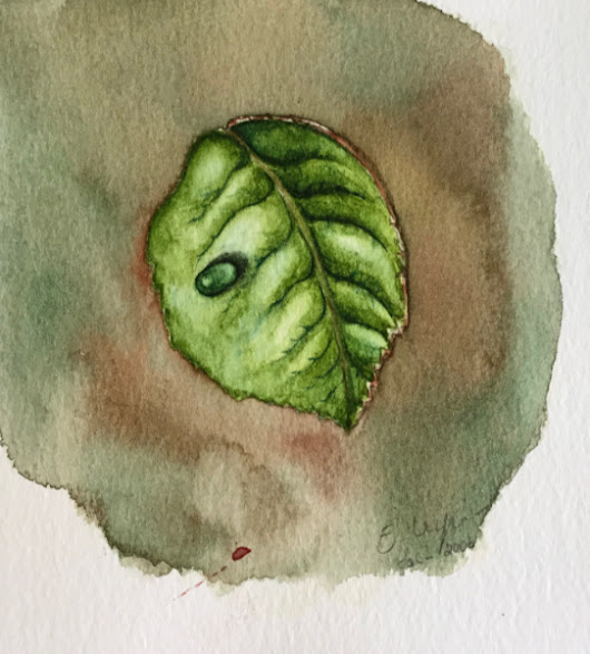 Dewm Drop on a leaf watercolor practice