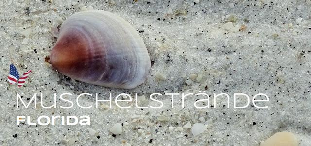 Muschelstrände Florida's, Florida USA