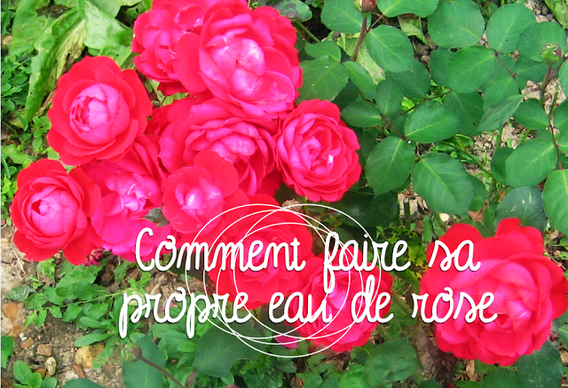 DIY-WATER-ROSE-eau-de-rose