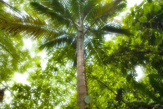 Main Ridge Forest Reserve, Tobago