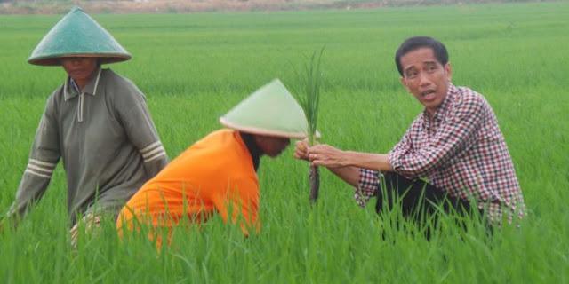 Wow, Bulog: Beras Impor yang Akan Masuk Indonesia Sampai Akhir Februari 261.000 Ton