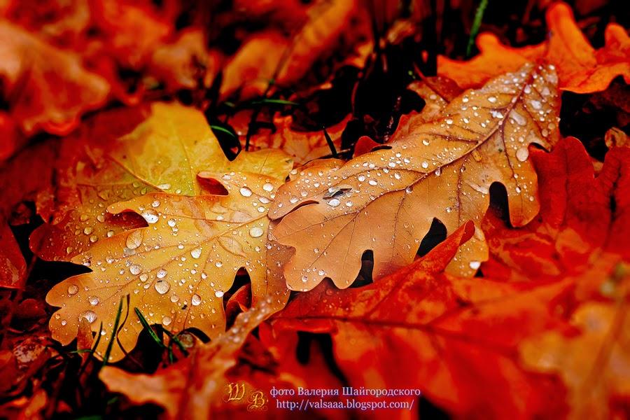 чернигов осень