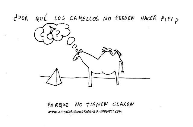 ¿Por qué los camellos no pueden hacer pipi? Porque no tienen claxon.