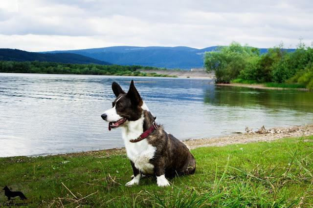 jezioro w górach, podróże z psem, z psem w podróży, wakacje z psem, urlop z psem, z psam na wakacjach, z psem nad jeziorem, z psem w górach, pies w górach, welsh corgi, welsh corgi cardigan, cardigan, cardimania, corgi, pies, psy, sudety, karkonosze, góry, wakacje