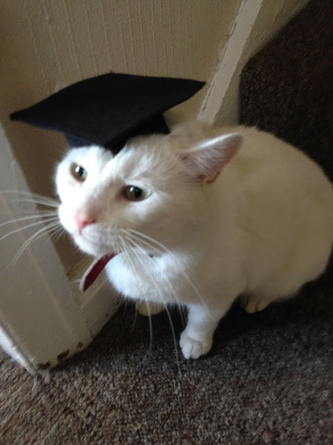 Cat graduation