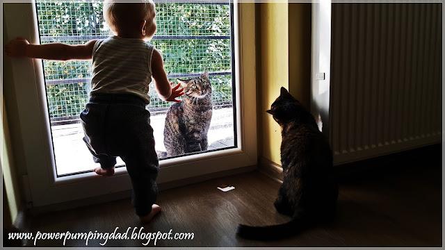 kot zasrał mieszkanie
