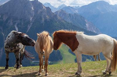 Horses on Kronplataz (Pian de Corones).
