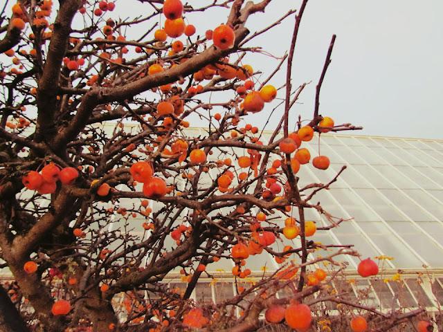 winter garden colour
