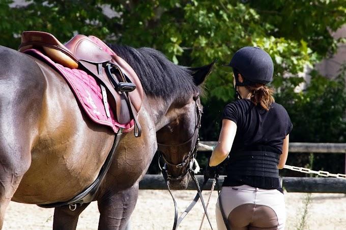 Évoluer avec son cheval grâce à The Tack Room