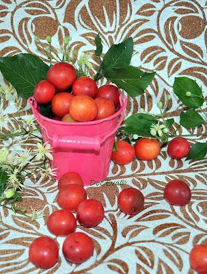 Wildpflaumen (Prunus americana)