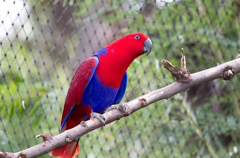 Cek Harga Burung Beo Anakan Sampai Dewasa Terbaru Cute766