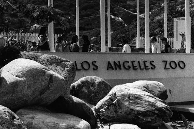 Photo of Los Angeles Zoo entrance 1966. The Zoo Houdinis and other stories. marchmatron.com
