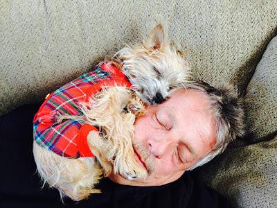 Perro pequeño y tierno durmiendo