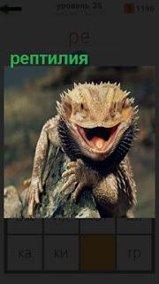 на камнях сидит рептилия и улыбается во всю пасть