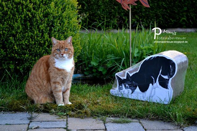 Katze Mimi mit einer Kratzfigur von FELIX